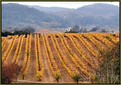 The Wolcott Vineyard, Dry Creek Valley, Sonoma County